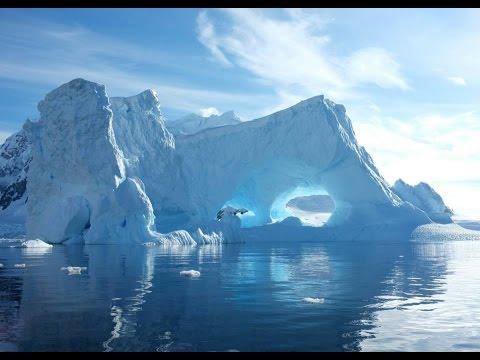 Nikon D5500 | First Look | Antarctica 2014 | Wildlife