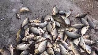 Miracolo dei pesci caduti dal cielo
