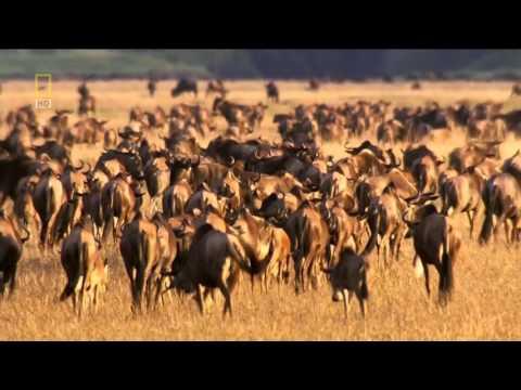 Afrika dykuma gyvūnai