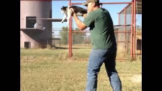 Cat Machine Gun Vine