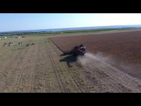 South Dakota Carinata Harvest 1