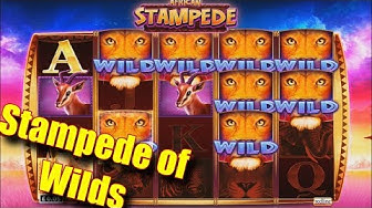 Stampede of Wilds - Online Slots - Casumo - The Reel Story
