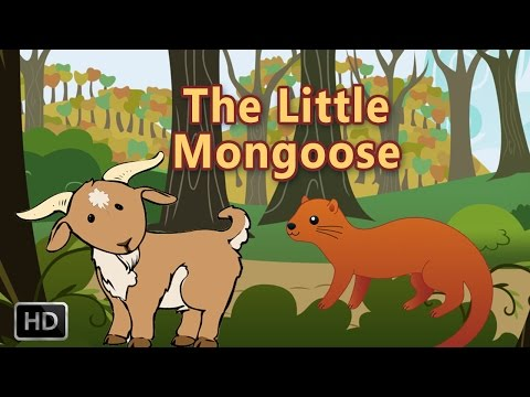 Short Stories For Children - The Little Mongoose - Stories of Wisdom - Animated Stories With MORAL