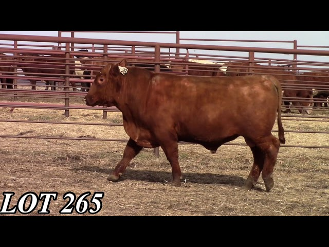 Mead Angus Farms Lot 265