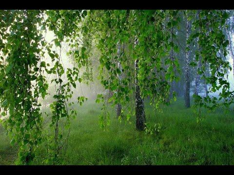 шесть часов татарской и башкирской музыки