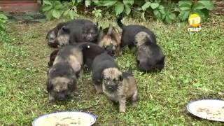 В Твери спасли 11 щенков. 2016-08-29