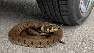 Experiment Snake vs Car vs Coca Cola, Fanta, Mirinda Balloon   Crushing Crunchy & Soft Things by Car