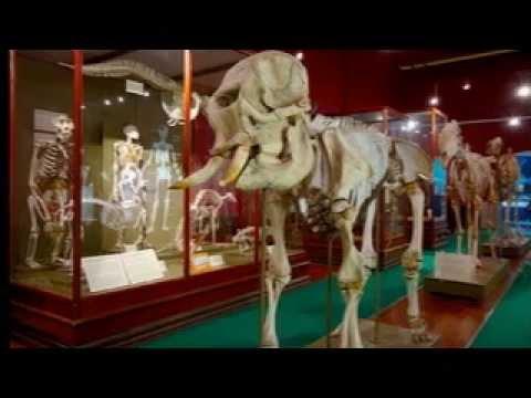 Western Australian Museum – Shipwreck Galleries