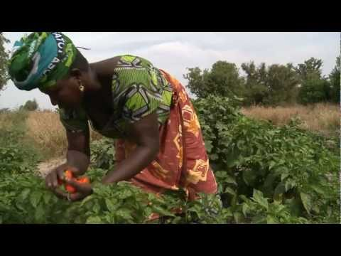Marketing the future - The Gambia participatory video