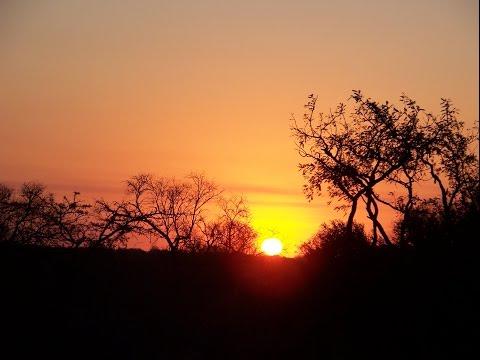 SudAfrica Mpumalanga Pretoria Kruger safari