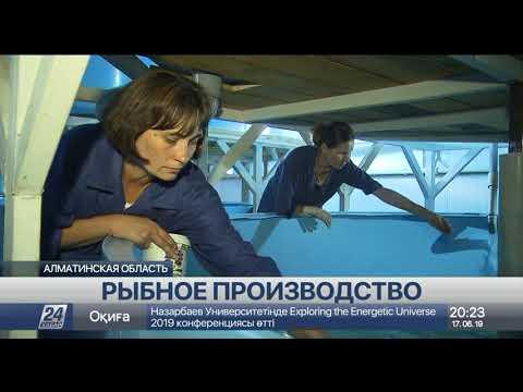 Алматинских мини-лобстеров впервые оценят отечественные потребители