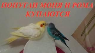 видео Миски для птиц, жако, корелл, канареек, неразлучников, волнистых попугаев