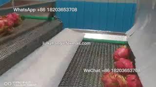pitahaya dragon fruits wasнing machine| Dragon fruits process machine