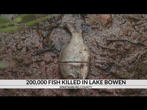 More Than 200k Fish Killed In Spartanburg Co. Lake