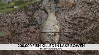 More than 200k fish killed in Spartanburg Co. lake