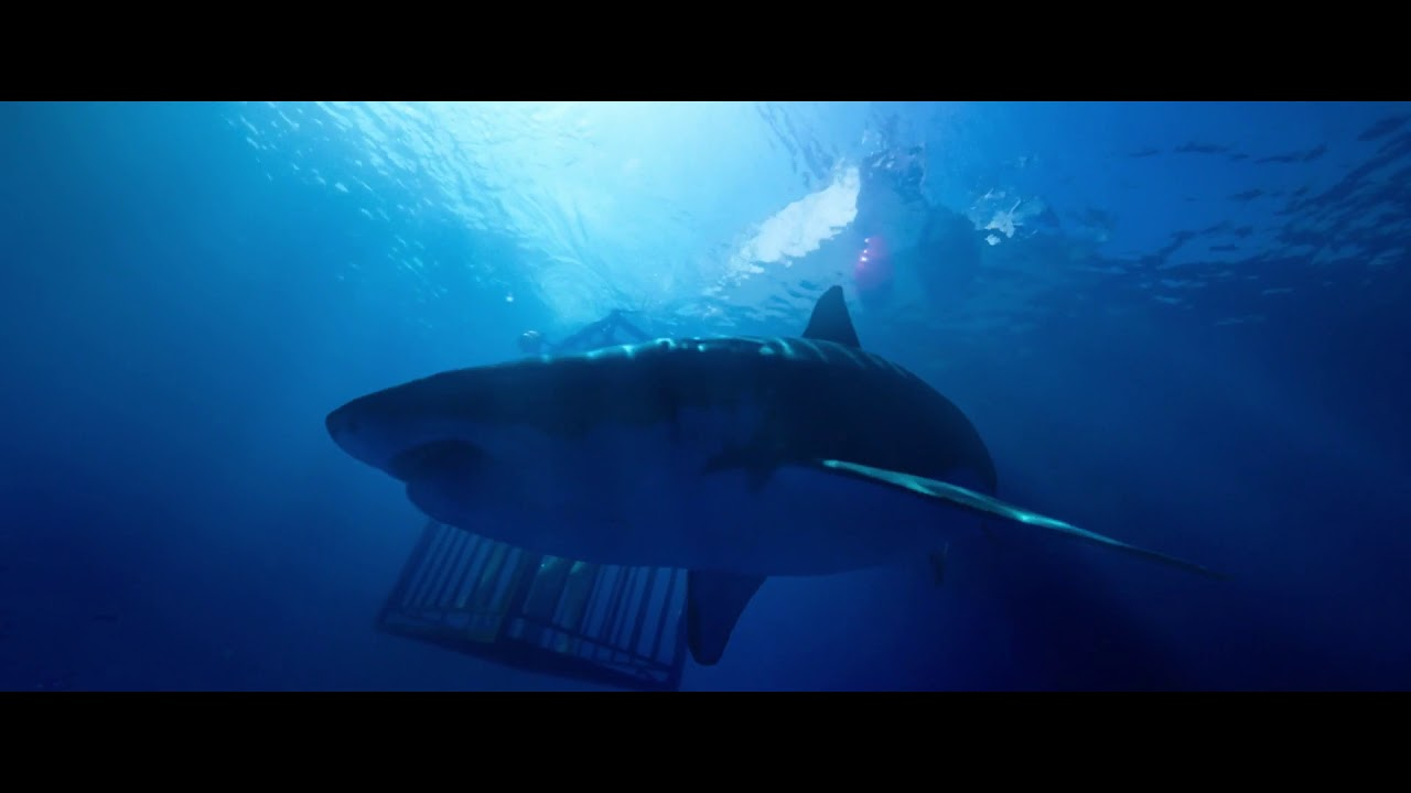 47 METERS DOWN - Bande-Annonce (VOST)