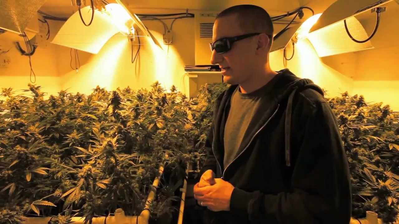 Building an indoor grow room  Growers Guide to Cannabis