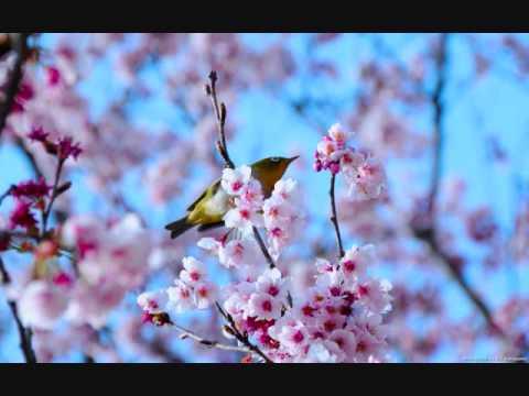無言歌 作品62-6 春の歌  メンデルスゾーン.wmv