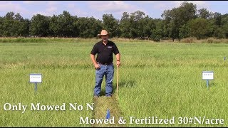 Improving Mature Bahiagrass Quality Part 1