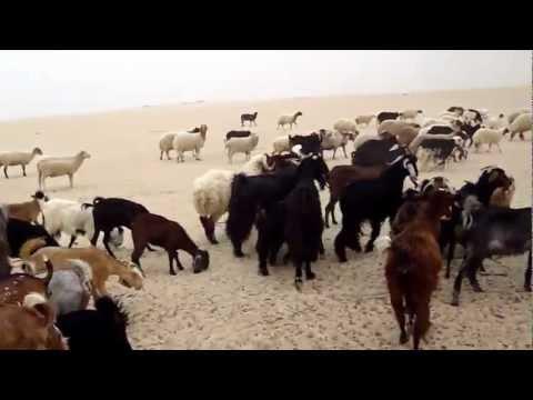 Abu Yusuf Wafra Farms II