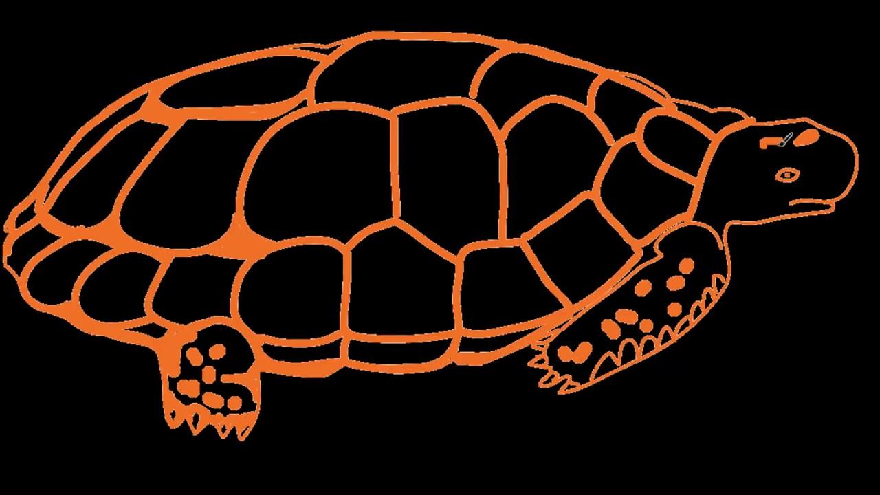 How To Draw Easy Turtle A Cartoon Turtle A Realistic Sea Turtle Dory