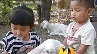 Viral..anak kecil tunggang kambing...😅😅