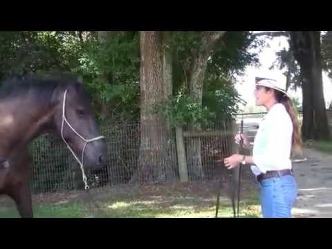 How to train a spooky and unpredictable horse part i youtube youtube premium publicscrutiny Gallery