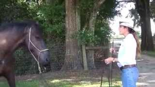 How to Train a Spooky and Unpredictable Horse, Part I