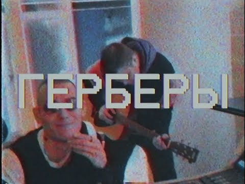 Рапсат - ГЕРБЕРЫ