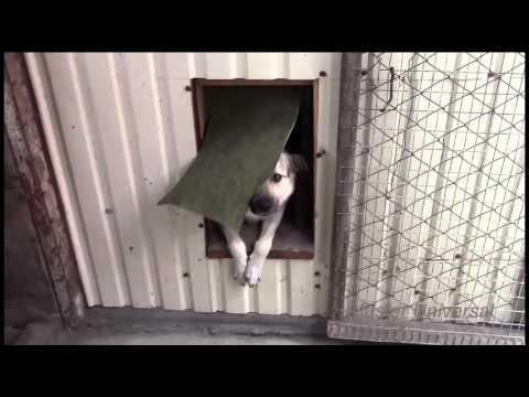 Двери для собак своими руками