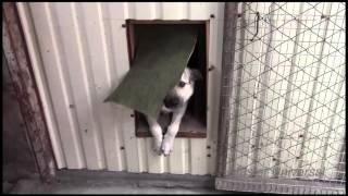 Зимняя будка для собаки.Необычное решение своими руками.