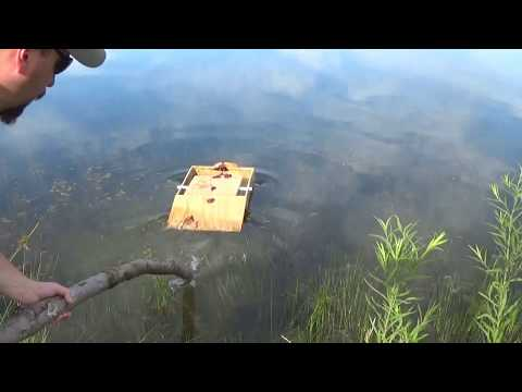 The Turtle Trap