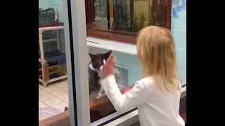 """Did you See these Cats? They""""re totally Mad-Cats are simply funny, clumsy and cute!"""