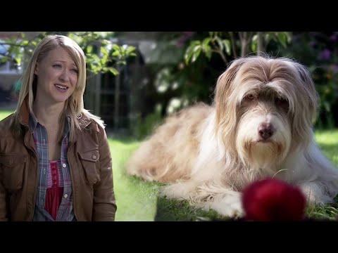 The Veteran | Pete Versus Life | Series 2 Episode 5 | Dead Parrot