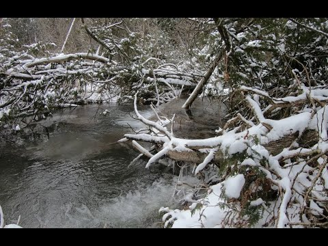 Winter Walk In Orono Crown Lands Highlights (with Music)