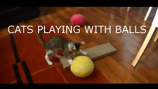 Cats playing with balls - Kitty play ball!