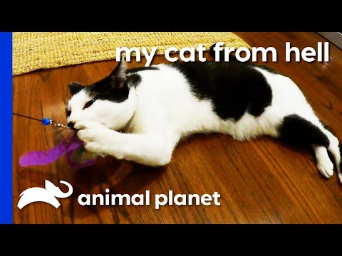 These Cats Wild Instincts Are Driving Their Owners Crazy! | My Cat From Hell
