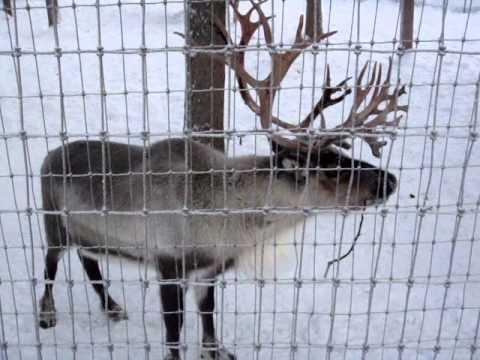 the santa claus house north pole alaska - Santa At The North Pole