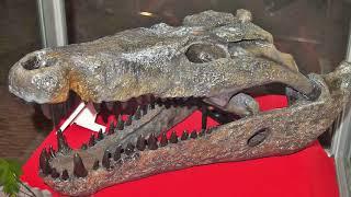 Mega-Beasts That Ruled Prehistoric Australia