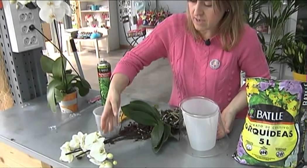 Trasplante Orquídea Youtube