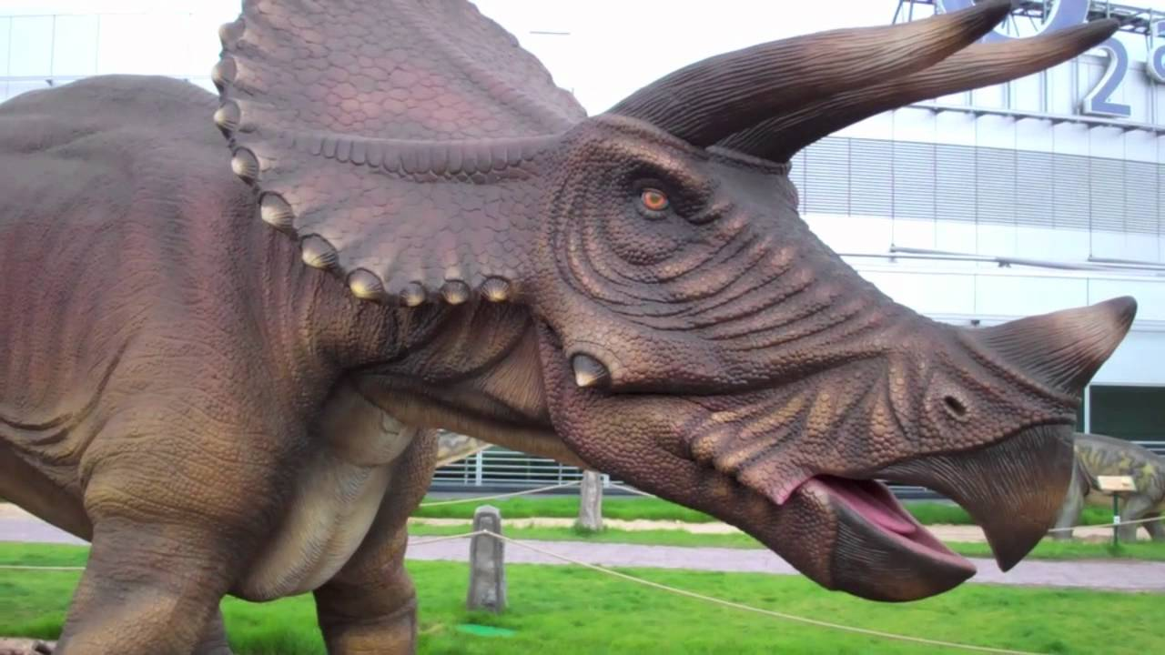 Tyrannosaurus vs Triceratops - DINOSAURS - YouTube |Triceratops Dinosaur