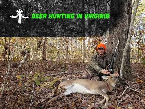 DEER HUNTING IN VIRGINIA