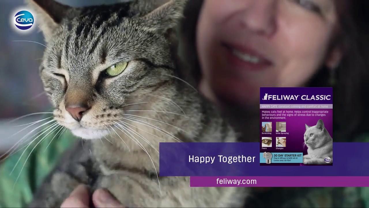успокаивающий ошейник для кошек - YouTube