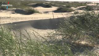 Dwaalfilm.eu: Kwade Hoek jonge duinen