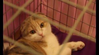выставка кошек в Караганде Весенний Ля мур.