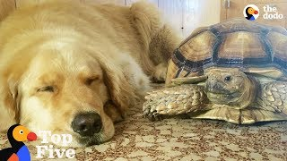 Dog and Turtle are Best Friends + Other Animal Best Friends | The Dodo Top 5
