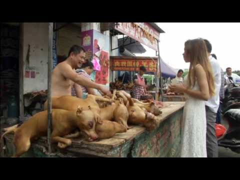 Annual dog meat festival kicks off in China.