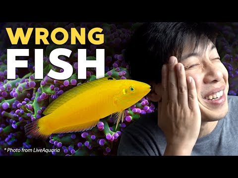 I Got The Wrong Fish... (story Time)