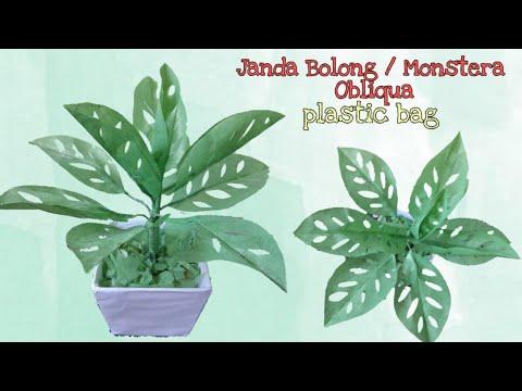 Diy Tanaman Janda Bolong Monstera Obliqua Dari Plastik Kresek How To Make Flower With Plastic Bag Youtube