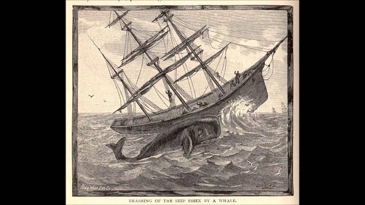 Essex sperm whale